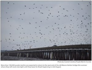 Photo Credit: Coastal Carolina Purple Martin Society