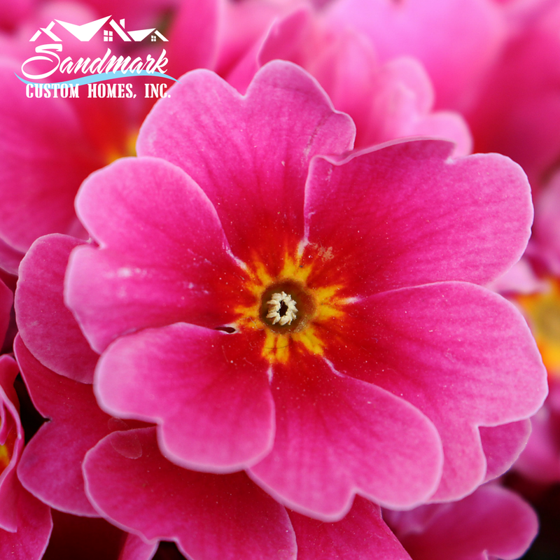 Pink flowers for your garden outer banks builders pink flowers for your garden mightylinksfo